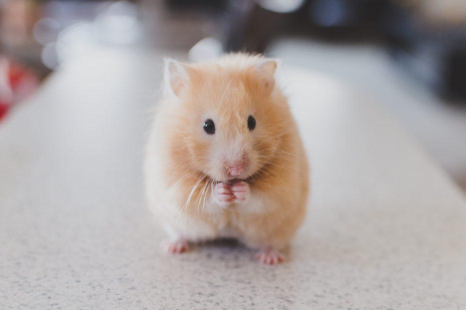Does your career feel like a hamster wheel?